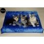 Koc Elway 160x210 - koty na niebieskim 674-4